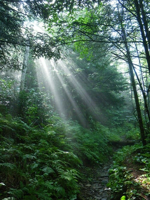 sunbeams shine through thick trees along a wooded pathway